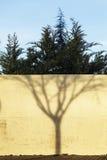一个不生叶的结构树的影子 图库摄影