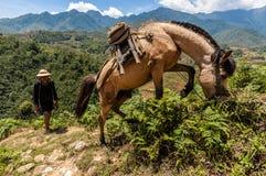 一个争吵者和他的马,在一个山行迹在Sapa,老街,越南 库存照片