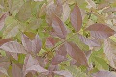 一个五颜六色的抽象叶子样式 库存照片