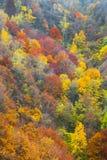 一个五颜六色的森林的鸟瞰图在秋天 库存图片