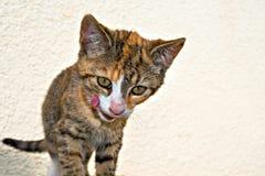 一个五颜六色的猫孩子的画象 库存图片