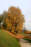 一个五颜六色的秋天山湖树风景在Annecy湖法国 库存图片