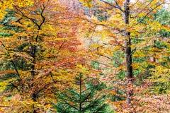 一个五颜六色的秋天森林的深度 库存照片