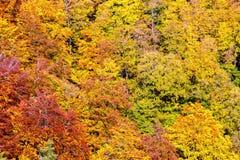 一个五颜六色的秋天森林的空中全景 免版税库存图片