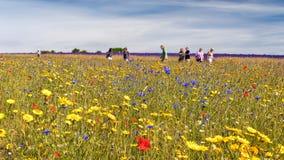 一个五颜六色的野花草甸,渥斯特夏,英国 库存照片