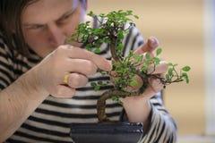 一个人与盆景树一起使用 免版税库存照片