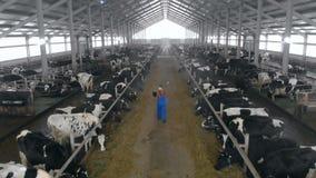 一个人与膝上型计算机一起使用,走在牛棚,后面看法 股票录像