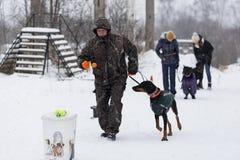 一个人使用与一只短毛猎犬在冬天,社论 免版税库存图片