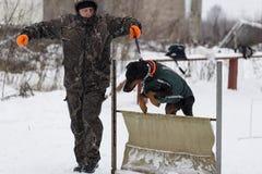 一个人使用与一只短毛猎犬在冬天,社论 免版税库存照片