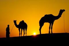 一个人和两头骆驼的剪影在日落 免版税库存图片