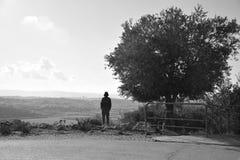 一个人在一棵橄榄树旁边站立 免版税库存图片