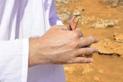 一个人在一片热的沙漠计数金钱 免版税库存图片