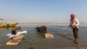 一个人在圣洁甘加河洗涤板料 瓦腊纳西 库存照片