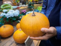 一个人在市场上选择一个南瓜 橙色南瓜在手上 免版税库存照片