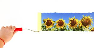 一个人在白色墙壁上的绘的风景winth向日葵有路辗刷子的 库存图片