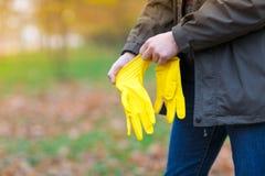 一个人在秋天公园穿上收获的叶子橡胶手套 免版税库存图片
