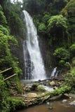 一个人坐在Catarata萨莫拉瀑布旁边的一个岩石在Los Chorros公园,哥斯达黎加 免版税库存照片