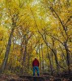 一个人外面在秋天期间的奥地利 图库摄影