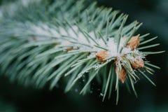 一个人字形特写镜头的绿色灌木 库存图片