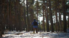 一个人是一个游人在有背包的一个杉木森林里 一次远足的一个年轻旅客在冬天 冬季体育活动 影视素材