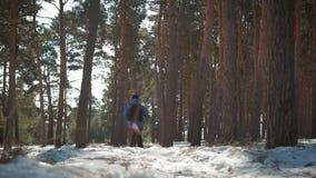 一个人是一个游人在有背包的一个杉木森林里 一次远足的一个年轻旅客在冬天 冬季体育活动 股票录像