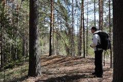 一个人是一个游人在有背包的一个杉木森林里 远足的tr 库存图片