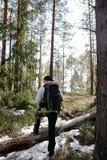一个人是一个游人在有背包的一个杉木森林里 远足的tr 免版税库存图片