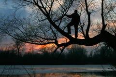 一个人的剪影树的,日落,黄昏 图库摄影