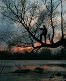 一个人的剪影树的,日落,黄昏 免版税图库摄影
