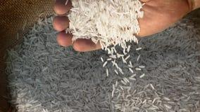 从一个人的手倾吐的未加工的米 股票视频