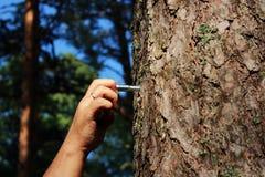 一个人紧固一个圆环对修理人和鞭打的杉木 施虐受虐狂,报告文学摄影的概念 库存图片