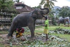 一个人运载他的孩子在神圣的牙遗物复合体的寺庙的内一头大象下在康提,斯里兰卡 免版税图库摄影