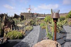 一个仙人掌庭院的片段在兰萨罗特岛海岛上的  免版税库存图片