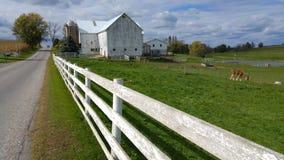 一个传统门诺派中的严紧派的谷仓和一个白色尖桩篱栅在俄亥俄,美国中间 免版税库存照片