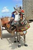 一个传统小马和推车在西西里岛 库存图片
