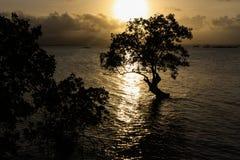 一个偏僻的结构树的剪影在海洋 库存照片
