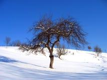 一个偏僻的结构树的横向 库存图片