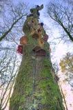 一个停止的结构树用蘑菇 库存照片