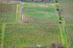 一个光秃的酒领域在春天在Istria的在克罗地亚 免版税库存图片