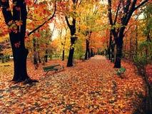 一个公园在森林里 免版税库存图片