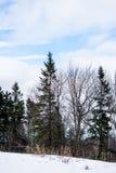 一个公园的一个多雪的冬天视图在加拿大 库存图片