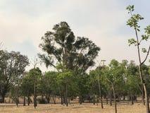 一个公园的中部在秋天的开头部分 库存照片