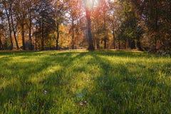 一个公园的秀丽在秋天与树的阴影在草的 免版税库存图片