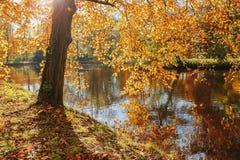 一个公园的迷人秀丽在秋天 免版税库存照片