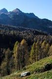一个具球果森林的秋季看法在阿尔卑斯 库存图片