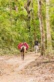 一个典型的看法在Tayrona国家公园哥伦比亚 免版税库存图片