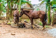一个典型的看法在Vinales在古巴 图库摄影