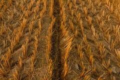 一个农业机器的版本记录在一个干草甸 免版税库存照片