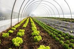 一个农业温室或隧道的内部 免版税库存图片