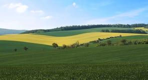一个农业风景的看法与强奸领域和麦子的 免版税库存图片
